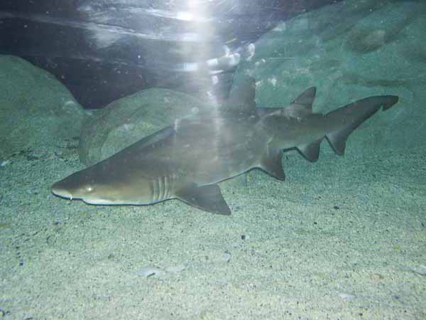 ://www.12234455.co.za shark cage diving in cape town south african
