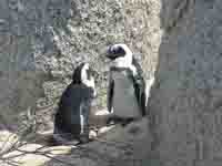 Penguins the Boulder