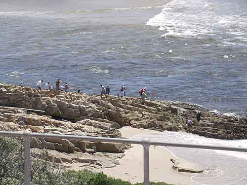 Plettenberg bay for Point lookout fishing
